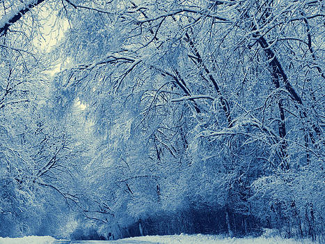 Winter wonderland by Slawek Sepko