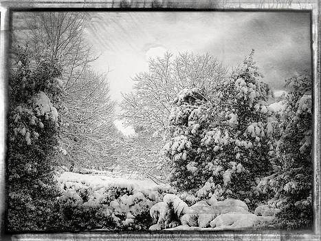 Winter Wonderland With Filmic Border by Carol Whaley Addassi