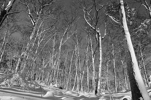 Winter Woods by Bucko Productions Photography