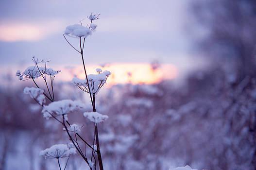 Jenny Rainbow - Winter Zen