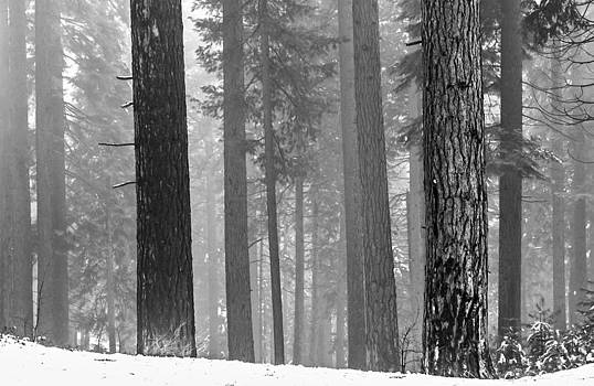 Winter's Beauty by Kay Price