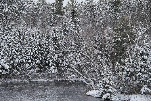 Winter's Canvas by Sue  Thomson