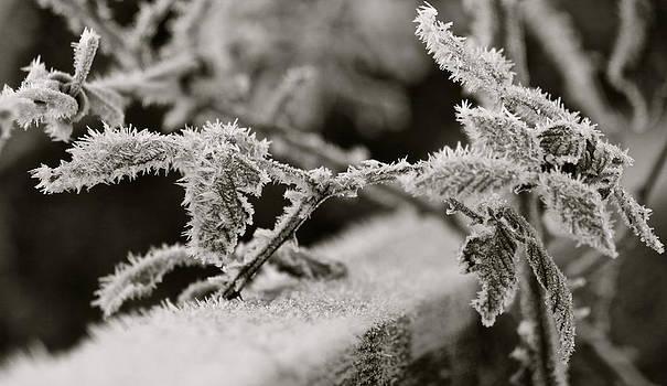Winters Frost by Karen Grist