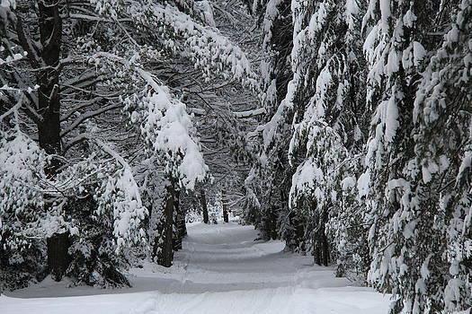 Winter's Path by Sue  Thomson