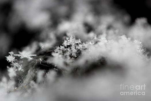 Winter's Peace by Stacey Zimmerman
