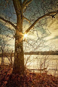 Winter's Sun by Victoria Winningham