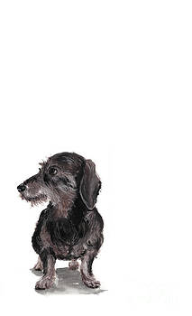 Wirehaired Dachshund - Rauhaardackel by Barbara Marcus