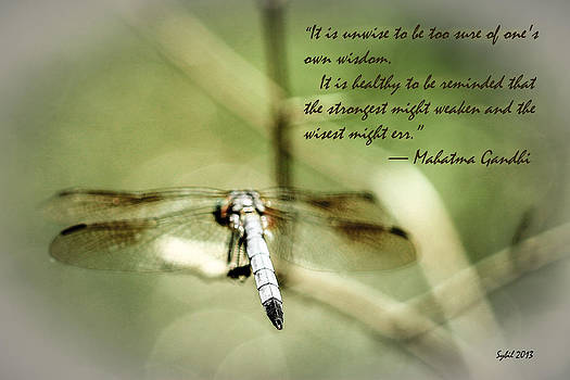 Wisdom by Sybil Conley