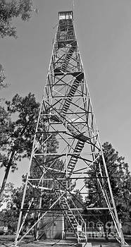 Witherbee Forestry Tower by Lisa Jones
