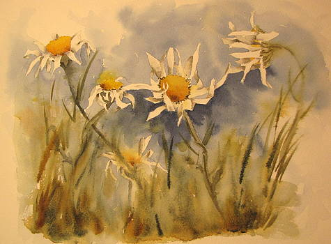 Withering Daisy's by Ramona Kraemer-Dobson
