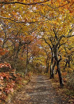 Fall Walk by Nicole Robinson
