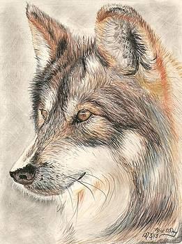 Wolf by Mick ODay