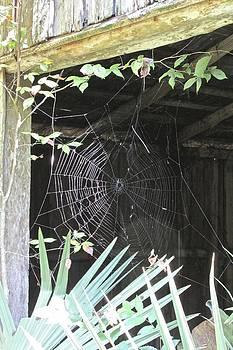 Wonderful Web by Dana Doyle