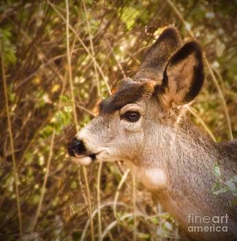Wondering Deer by Kimberly Maiden