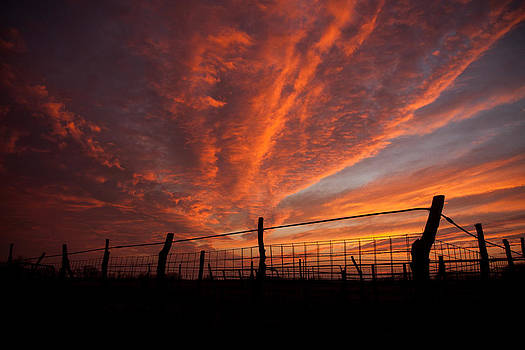 Wonderous Sky by Shirley Heier