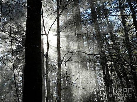 Wondrous Light by Avis  Noelle