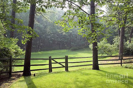 Wood Fence by Tony Cordoza