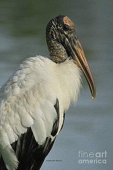 Deborah Benoit - Wood Stork in Oil