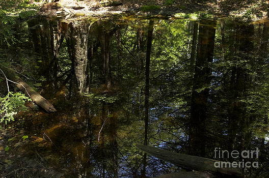 Wooded Reflection by Mark Messenger