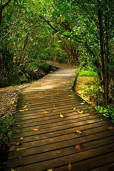 Wooden Path by Anthony Pratomo Putro