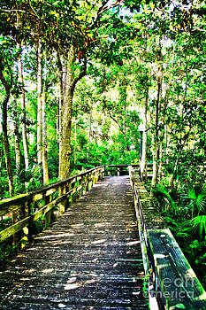 Wooden Trail by Kelly Efstathiou