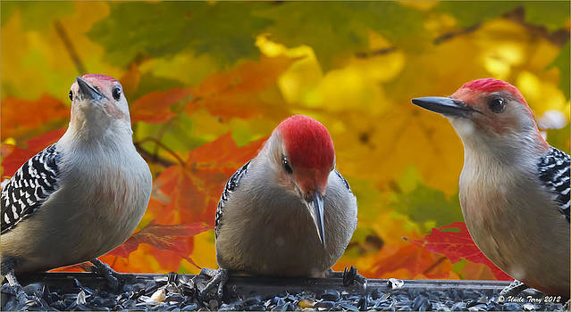 Woodies by Terry Jacumin