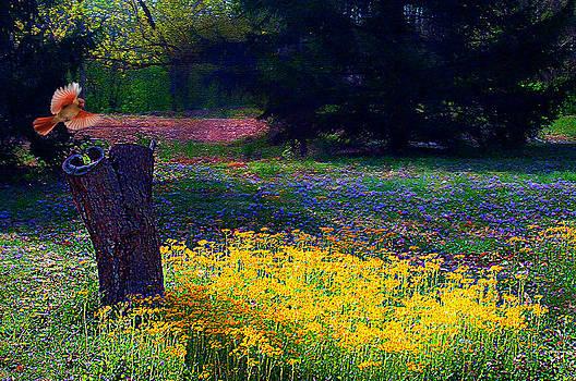Randall Branham - Woodland  Glade Spring Flowers