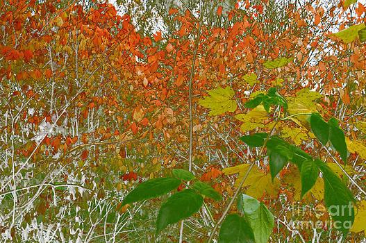 Woodland by Kathie McCurdy