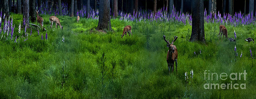 Woodland Pana by Fred L Gardner