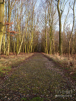 Woodland Path in Winter by David Hanlon