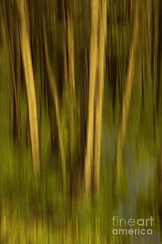 Woodland Tapestry by Sandi Mikuse