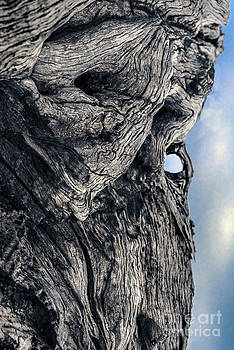 WoodMan by Petros Yiannakas