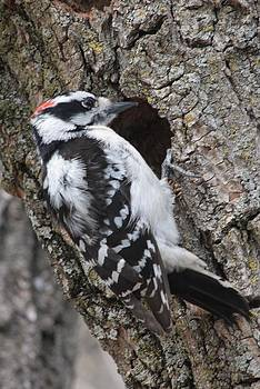 Woodpecker at Wilkin's Lake by Wendy  Beatty