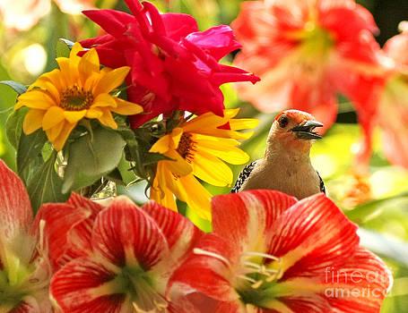 Woodpecker Chat  by Luana K Perez