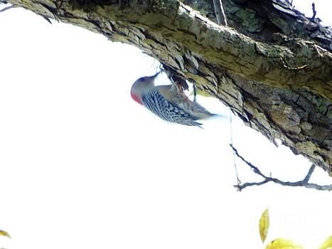 Woodpecker in a Tree by Marie Bulger