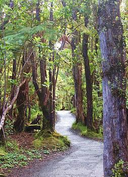 Woods by Caroline Lomeli