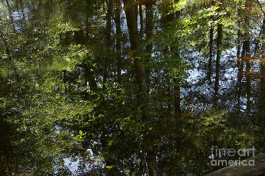 Woods Reflection by Mark Messenger