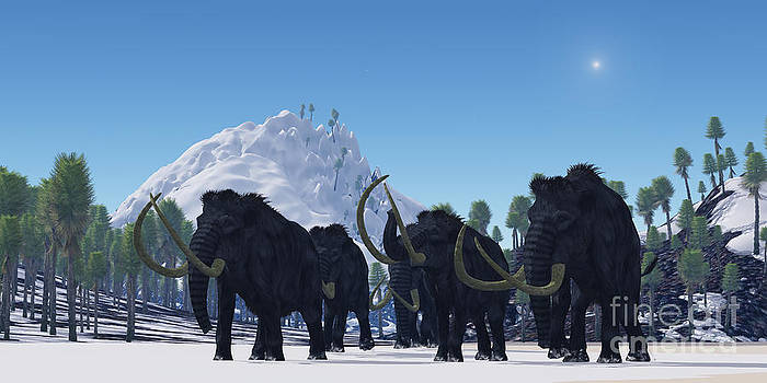 Corey Ford - Woolly Mammoth