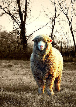 Wooly - Selective Color by Amy Schauland