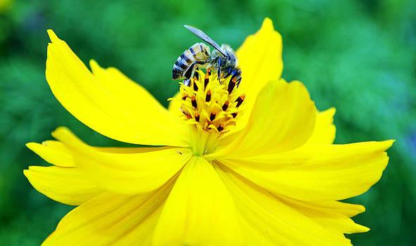 Cindy Nunn - Worker Bee
