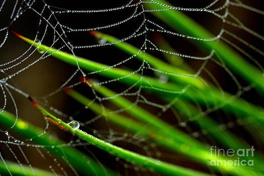 World Wide Web by Shayne Johnson Fleming