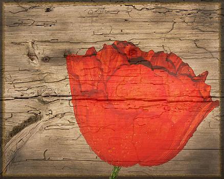 Randall Branham - wormwood poppy