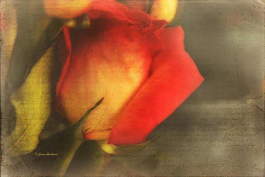 Written on a Rose by Joan Bertucci