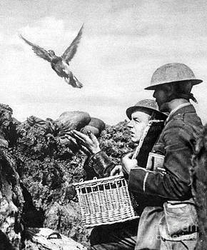 Photo Researchers - Wwi Releasing British Carrier Pigeon
