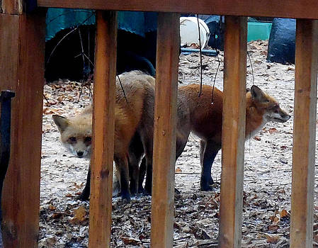 X-Rated FOX News by Glenn McCurdy
