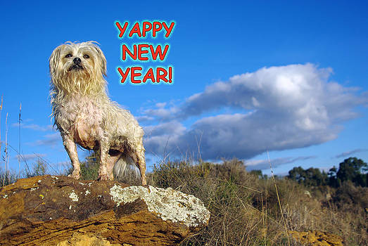 Yappy New Year by Helen Akerstrom Photography