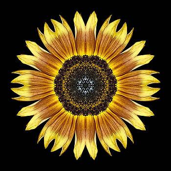 Yellow and Brown Sunflower Flower Mandala by David J Bookbinder