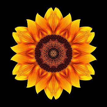 Yellow and Orange Sunflower VI Flower Mandala by David J Bookbinder