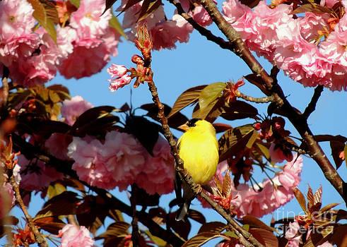 Yellow and Pink by Pamela Rivera