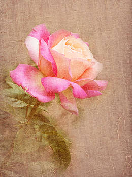 Yellow and pink rose aged textured background by Kim M Smith